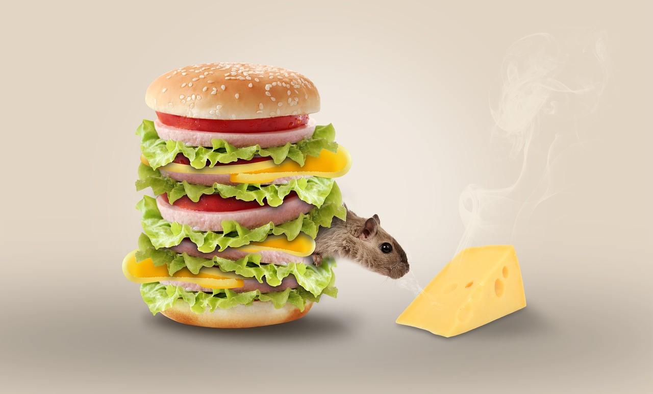 cheese-1391875_1280.jpg